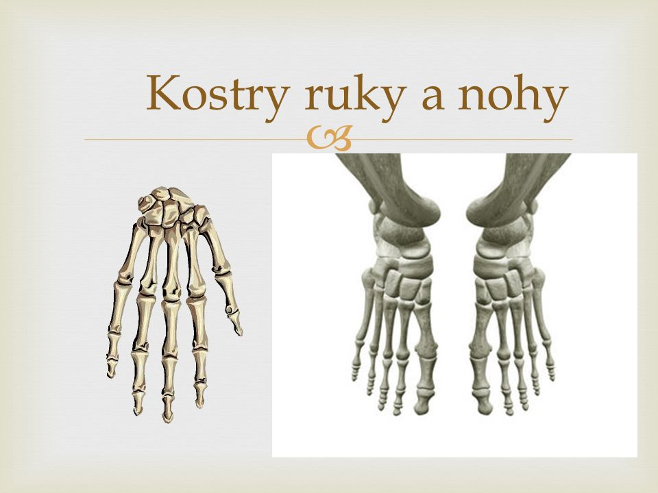  Kostry ruky a nohy