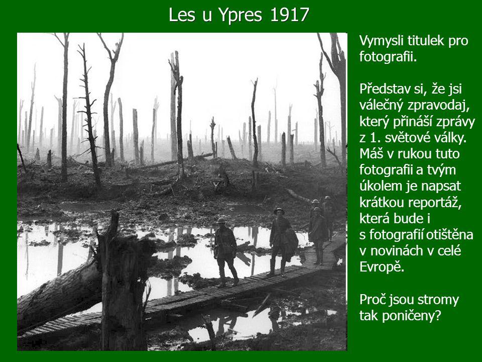 Les u Ypres 1917 Vymysli titulek pro fotografii.