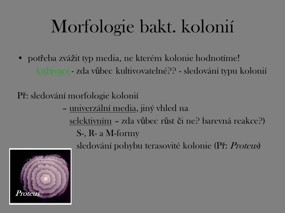 Morfologie bakt. kolonií pot ř eba zvá ž it typ media, ne kterém kolonie hodnotíme! kultivace - zda v ů bec kultivovatelné?? - sledování typu kolonií