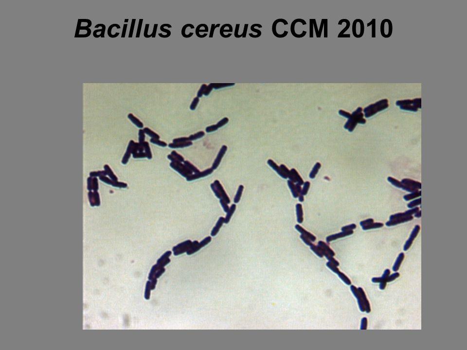Bacillus cereus CCM 2010