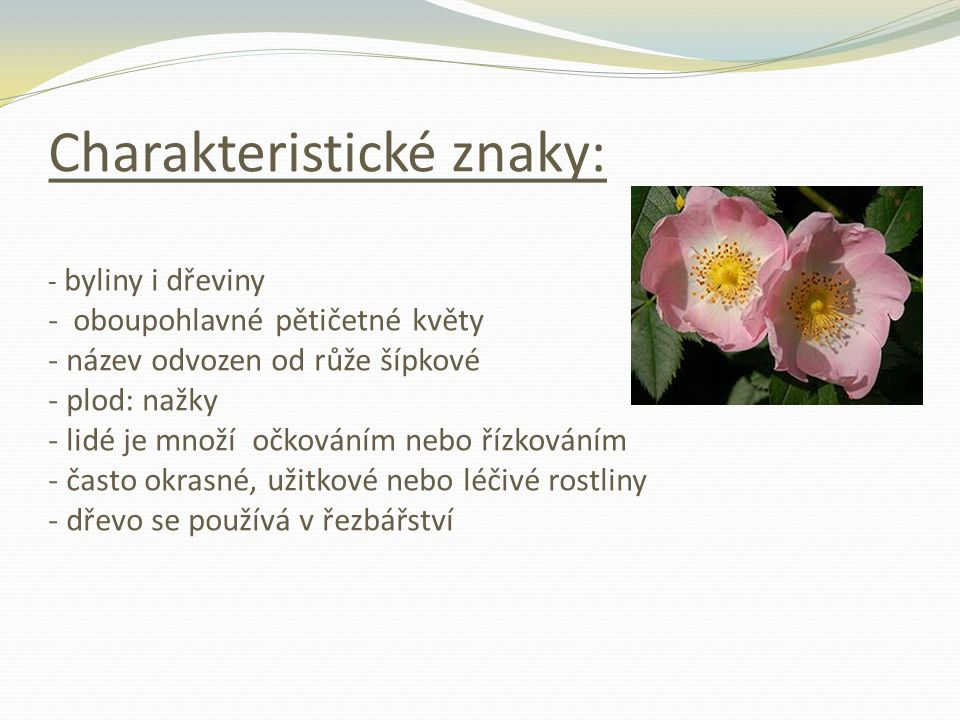 Charakteristické znaky: - byliny i dřeviny - oboupohlavné pětičetné květy - název odvozen od růže šípkové - plod: nažky - lidé je množí očkováním nebo řízkováním - často okrasné, užitkové nebo léčivé rostliny - dřevo se používá v řezbářství