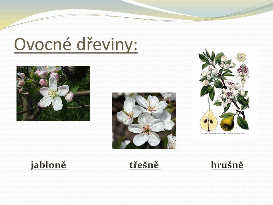 Ovocné dřeviny: jabloně třešně hrušně