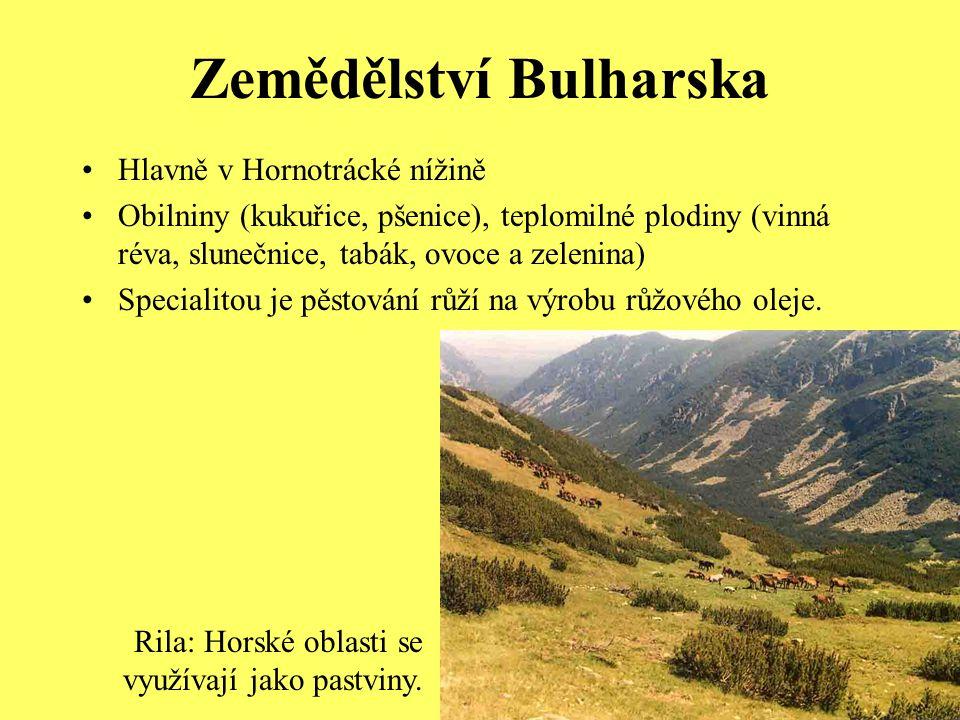 Zemědělství Bulharska Hlavně v Hornotrácké nížině Obilniny (kukuřice, pšenice), teplomilné plodiny (vinná réva, slunečnice, tabák, ovoce a zelenina) Specialitou je pěstování růží na výrobu růžového oleje.