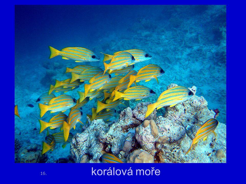 16. korálová moře