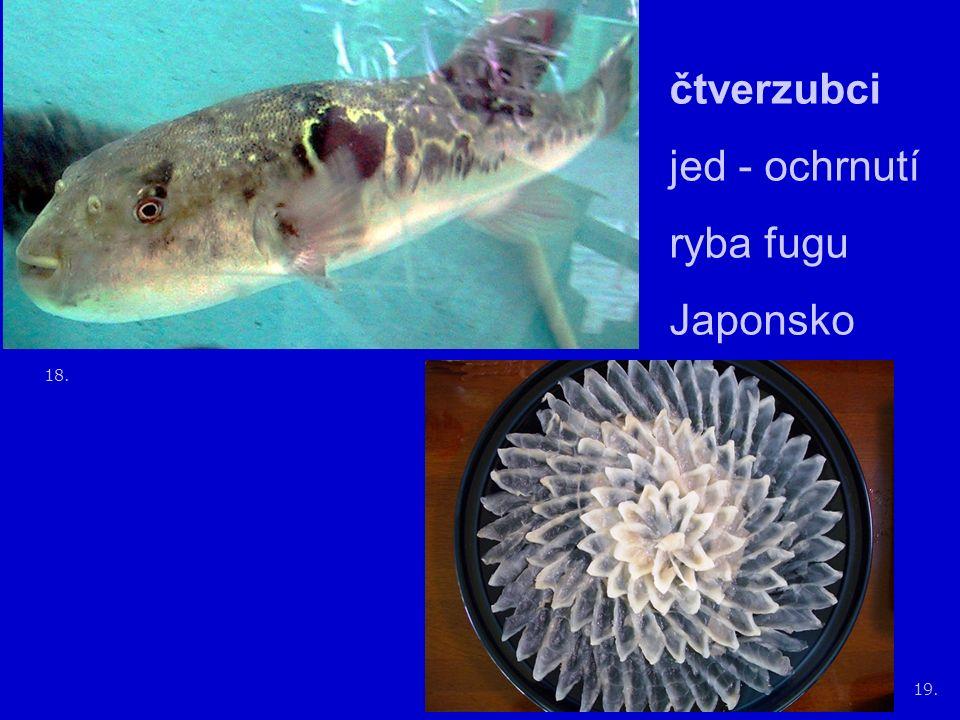18. 19. čtverzubci jed - ochrnutí ryba fugu Japonsko