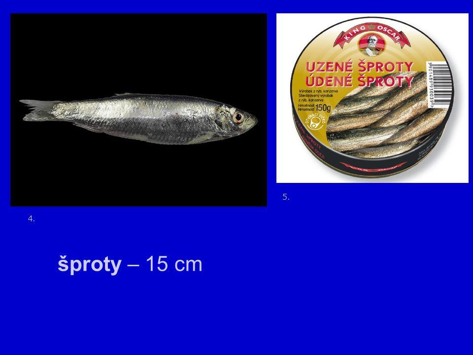6. sardinka obecná - hejna 7. severská moře – Balt drobná ryba – olejovky vitamín D