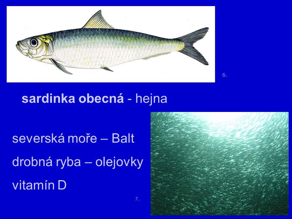 10. 9. treska obecná až 1,5 – 2 m filety tučné maso játra 8.
