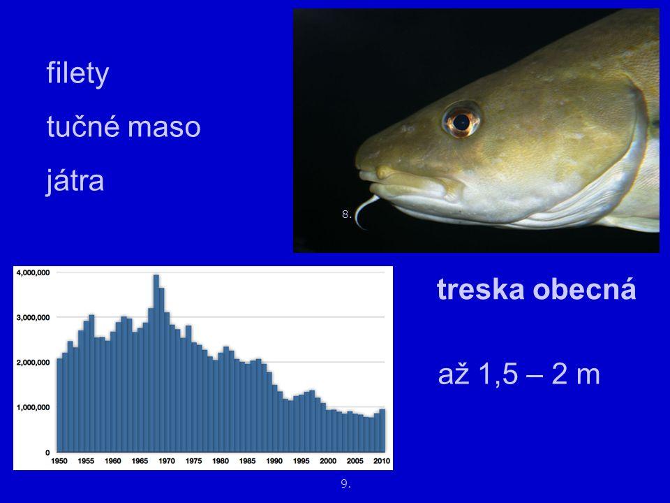 12. 11. makrela obecná tučná (1/3 tuk) uzení konzervy 10.