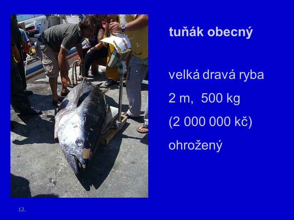 12. tuňák obecný velká dravá ryba 2 m, 500 kg (2 000 000 kč) ohrožený