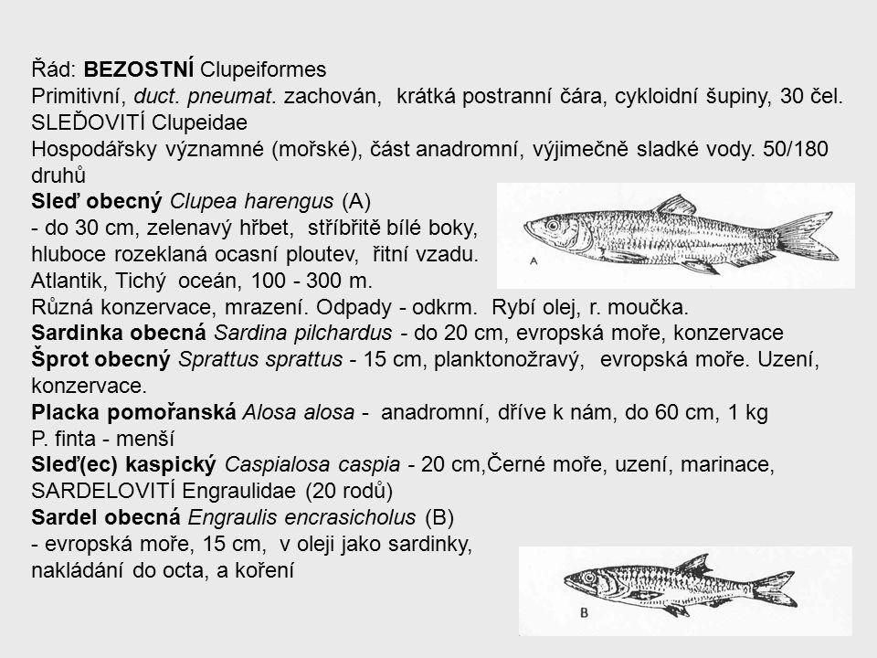 Řád: BEZOSTNÍ Clupeiformes Primitivní, duct. pneumat.