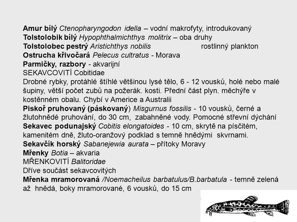 Amur bílý Ctenopharyngodon idella – vodní makrofyty, introdukovaný Tolstolobik bílý Hypophthalmichthys molitrix – oba druhy Tolstolobec pestrý Aristichthys nobilis rostlinný plankton Ostrucha křivočará Pelecus cultratus - Morava Parmičky, razbory - akvarijní SEKAVCOVITÍ Cobitidae Drobné rybky, protáhlé štíhlé většinou lysé tělo, 6 - 12 vousků, holé nebo malé šupiny, větší počet zubů na požerák.