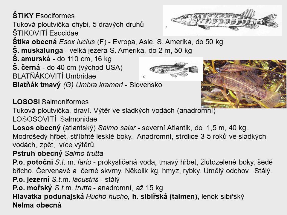 ŠTIKY Esociformes Tuková ploutvička chybí, 5 dravých druhů ŠTIKOVITÍ Esocidae Štika obecná Esox lucius (F) - Evropa, Asie, S.