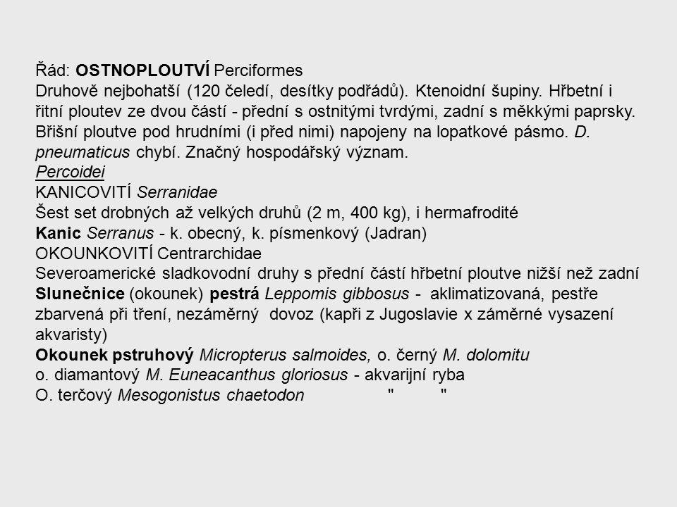 Řád: OSTNOPLOUTVÍ Perciformes Druhově nejbohatší (120 čeledí, desítky podřádů).
