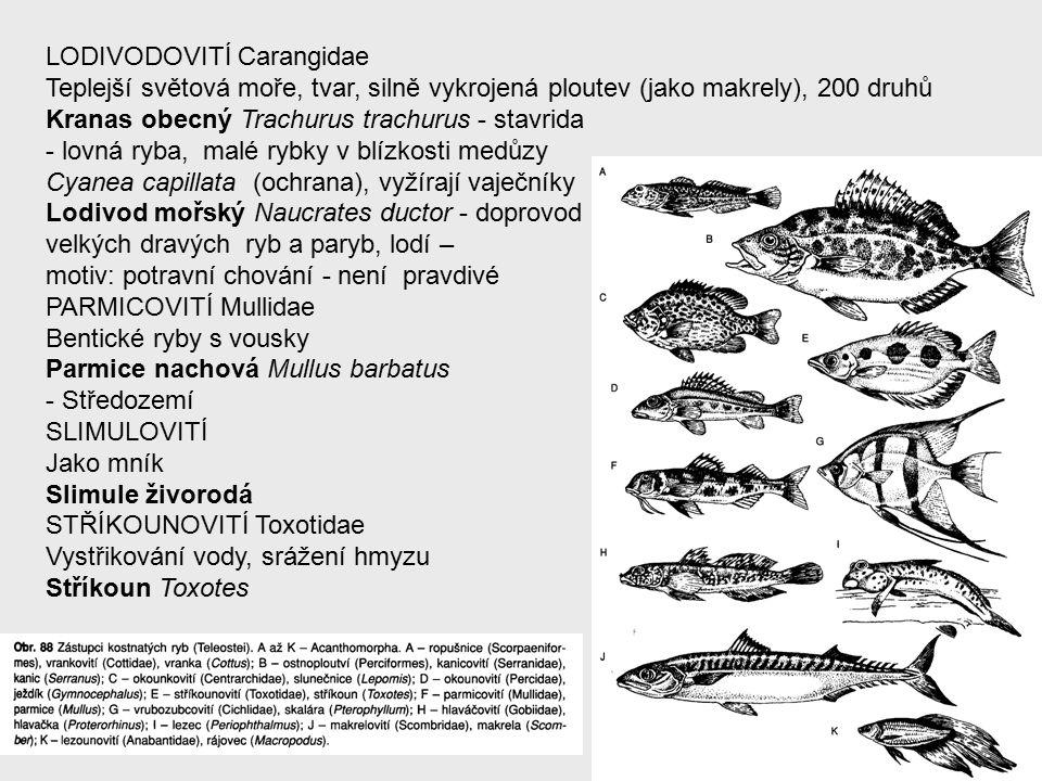 LODIVODOVITÍ Carangidae Teplejší světová moře, tvar, silně vykrojená ploutev (jako makrely), 200 druhů Kranas obecný Trachurus trachurus - stavrida - lovná ryba, malé rybky v blízkosti medůzy Cyanea capillata (ochrana), vyžírají vaječníky Lodivod mořský Naucrates ductor - doprovod velkých dravých ryb a paryb, lodí – motiv: potravní chování - není pravdivé PARMICOVITÍ Mullidae Bentické ryby s vousky Parmice nachová Mullus barbatus - Středozemí SLIMULOVITÍ Jako mník Slimule živorodá STŘÍKOUNOVITÍ Toxotidae Vystřikování vody, srážení hmyzu Stříkoun Toxotes