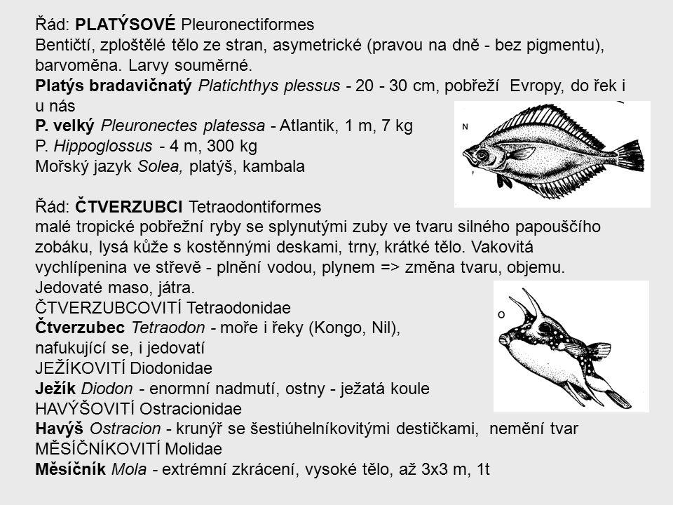 Řád: PLATÝSOVÉ Pleuronectiformes Bentičtí, zploštělé tělo ze stran, asymetrické (pravou na dně - bez pigmentu), barvoměna.