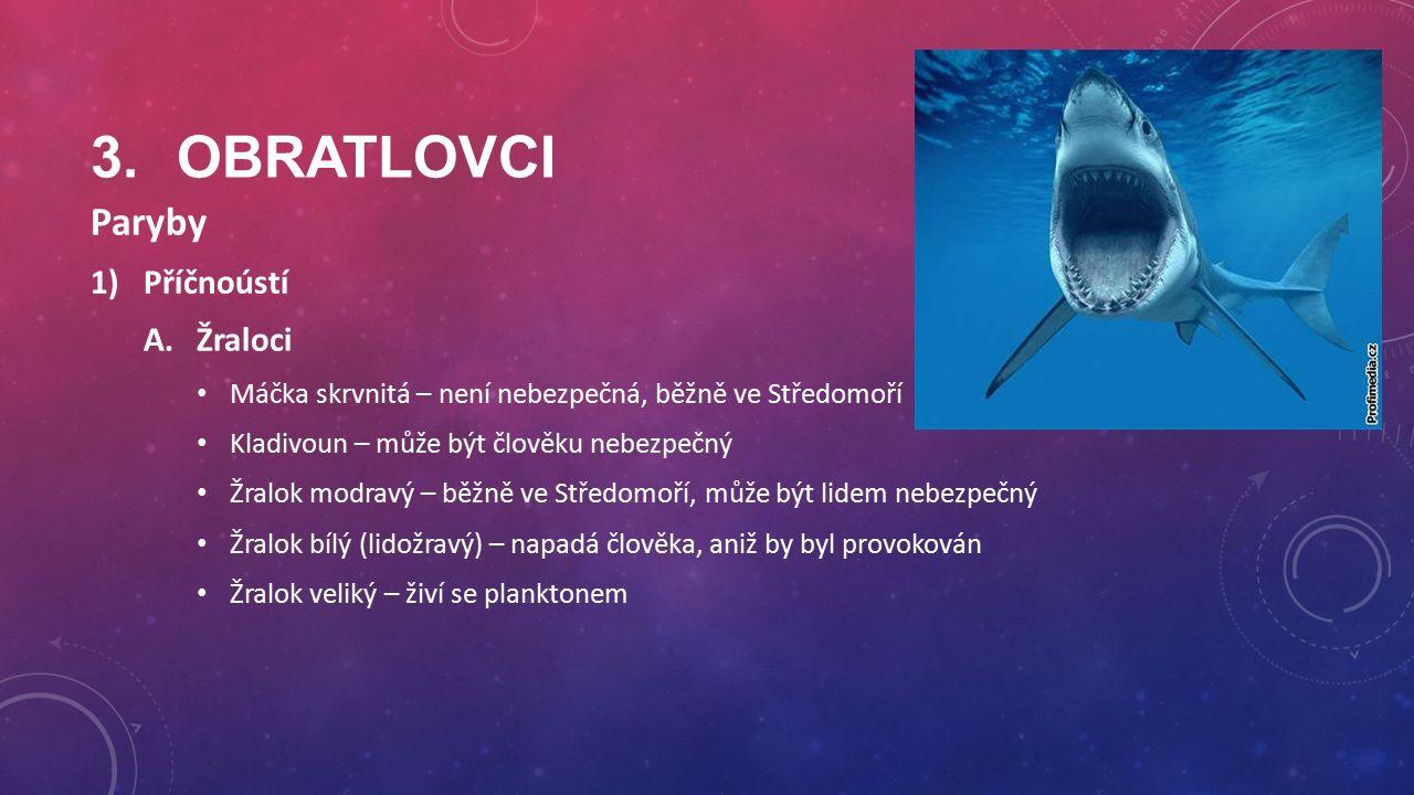 3.OBRATLOVCI Paryby 1)Příčnoústí A.Žraloci Máčka skrvnitá – není nebezpečná, běžně ve Středomoří Kladivoun – může být člověku nebezpečný Žralok modravý – běžně ve Středomoří, může být lidem nebezpečný Žralok bílý (lidožravý) – napadá člověka, aniž by byl provokován Žralok veliký – živí se planktonem