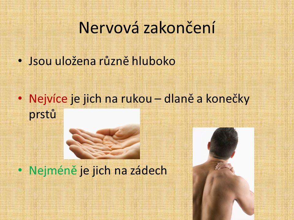 Nervová zakončení Jsou uložena různě hluboko Nejvíce je jich na rukou – dlaně a konečky prstů Nejméně je jich na zádech