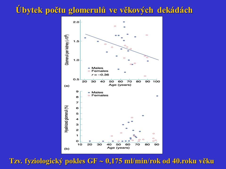 Úbytek počtu glomerulů ve věkových dekádách Tzv. fyziologický pokles GF  0,175 ml/min/rok od 40.roku věku
