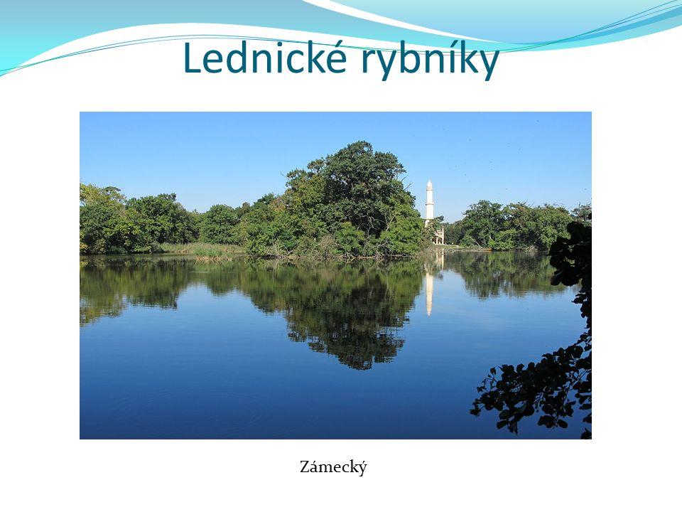 Lednické rybníky Zámecký