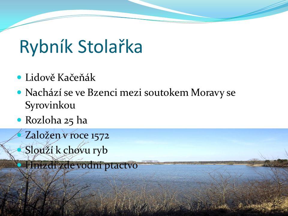 Rybník Stolařka Lidově Kačeňák Nachází se ve Bzenci mezi soutokem Moravy se Syrovinkou Rozloha 25 ha Založen v roce 1572 Slouží k chovu ryb Hnízdí zde