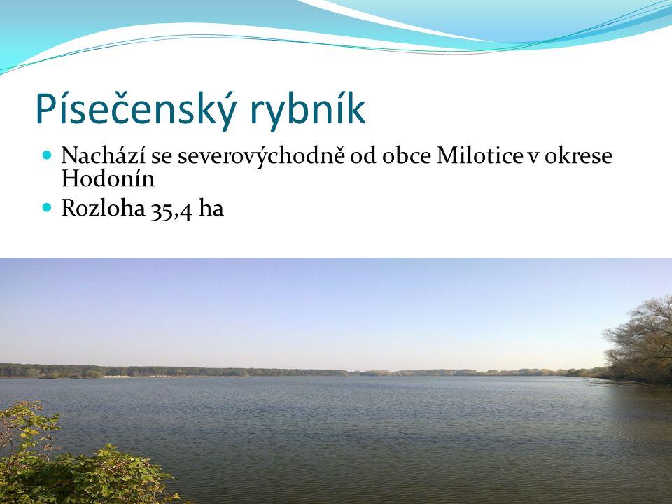 Písečenský rybník Nachází se severovýchodně od obce Milotice v okrese Hodonín Rozloha 35,4 ha