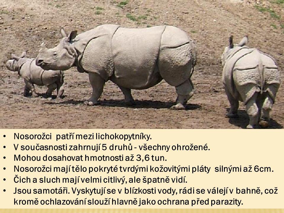 Nosorožci patří mezi lichokopytníky.V současnosti zahrnují 5 druhů - všechny ohrožené.