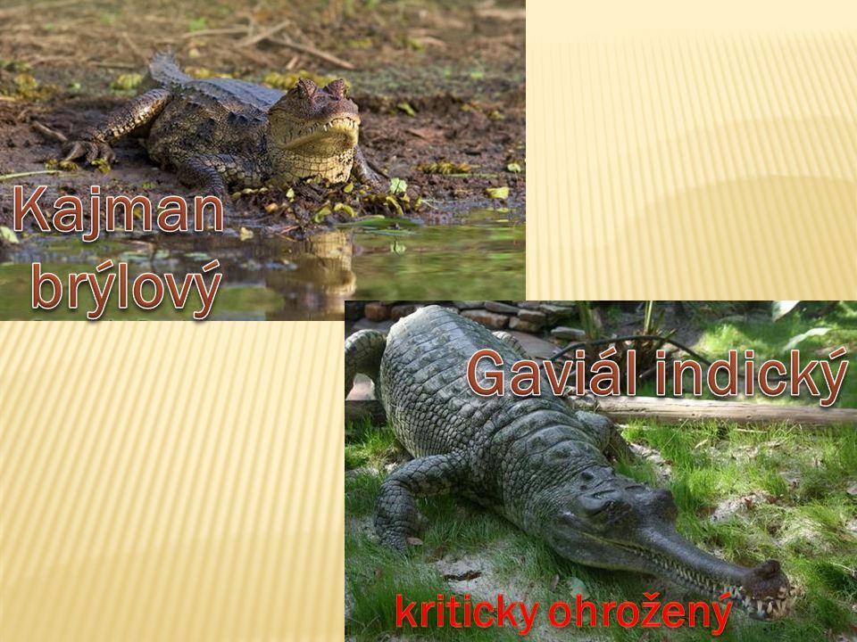 https://www.youtube.com/watch?v=WfrG95GyU9U Souboj hrochů