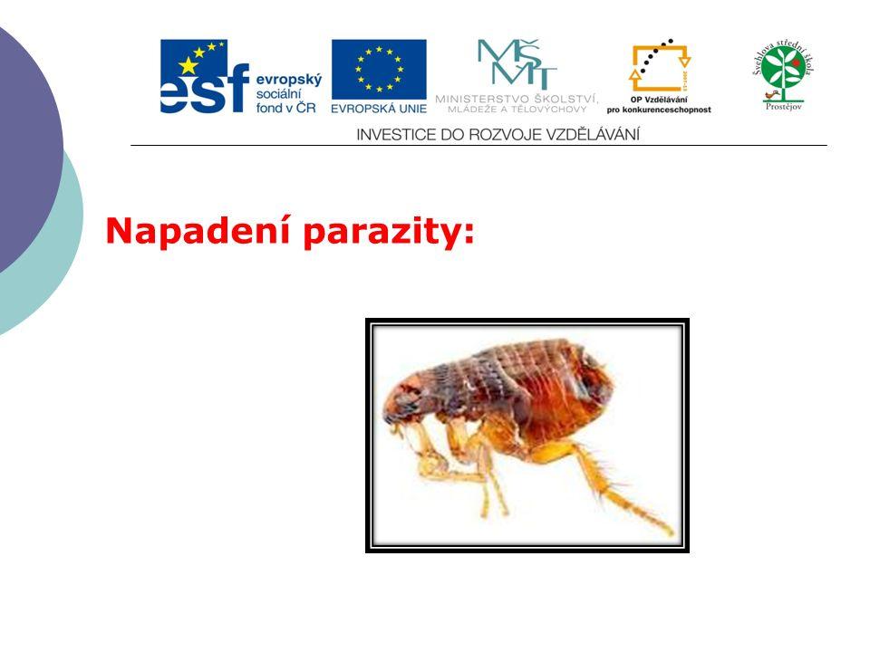 Napadení parazity: