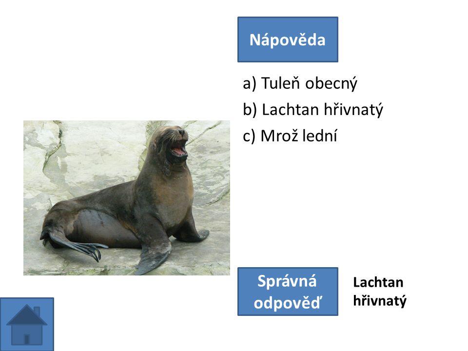 a) Tuleň obecný b) Lachtan hřivnatý c) Mrož lední Nápověda Správná odpověď Lachtan hřivnatý