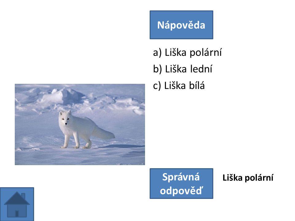 a) Liška polární b) Liška lední c) Liška bílá Nápověda Správná odpověď Liška polární