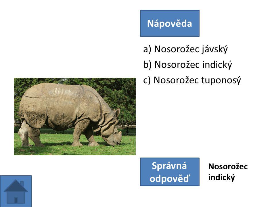 a) Nosorožec jávský b) Nosorožec indický c) Nosorožec tuponosý Nápověda Správná odpověď Nosorožec indický