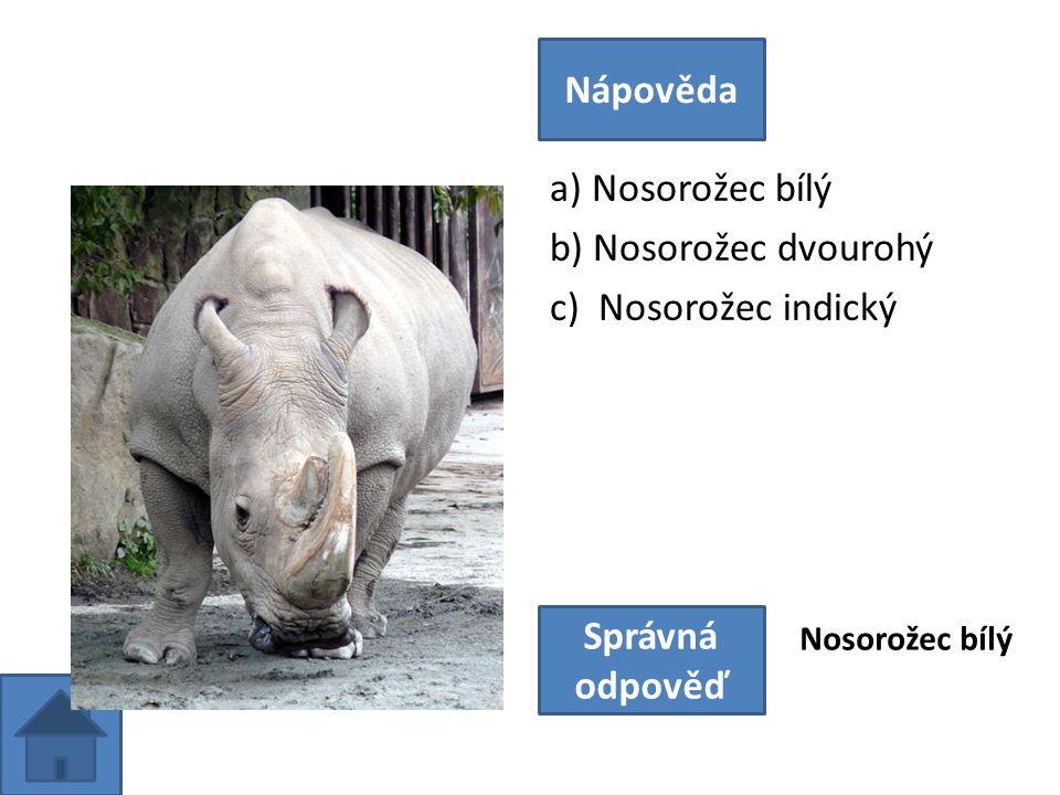 a) Nosorožec bílý b) Nosorožec dvourohý c) Nosorožec indický Nápověda Správná odpověď Nosorožec bílý