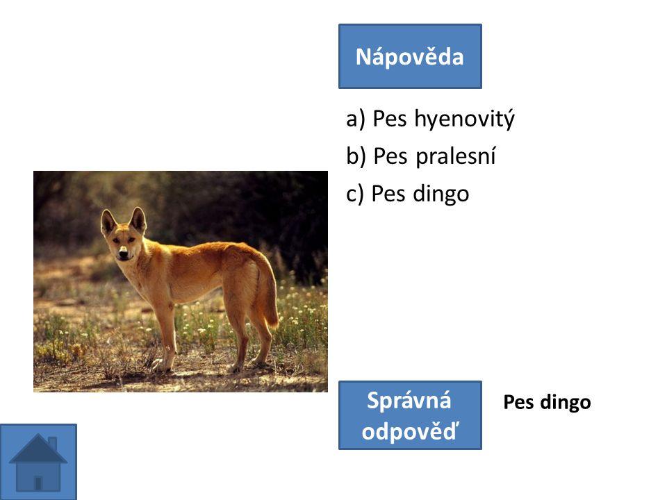 a) Pes hyenovitý b) Pes pralesní c) Pes dingo Nápověda Správná odpověď Pes dingo