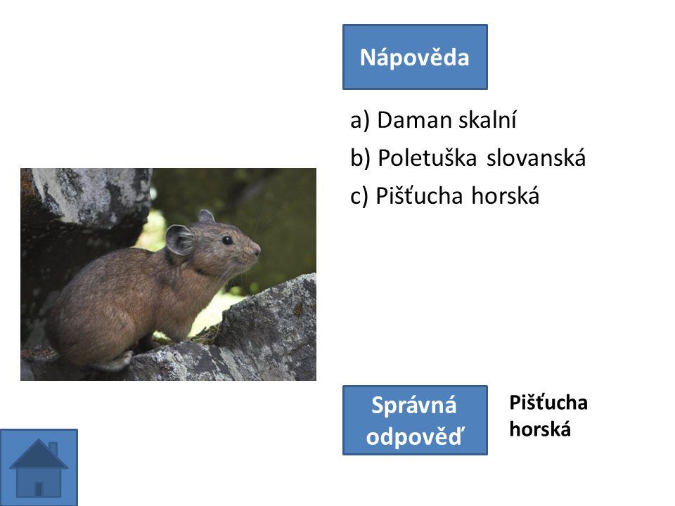 a) Daman skalní b) Poletuška slovanská c) Pišťucha horská Nápověda Správná odpověď Pišťucha horská