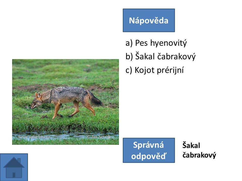 a) Pes hyenovitý b) Šakal čabrakový c) Kojot prérijní Nápověda Správná odpověď Šakal čabrakový