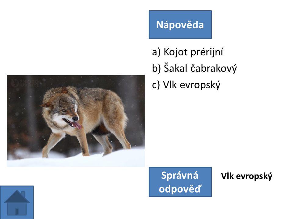 a) Kojot prérijní b) Šakal čabrakový c) Vlk evropský Nápověda Správná odpověď Vlk evropský