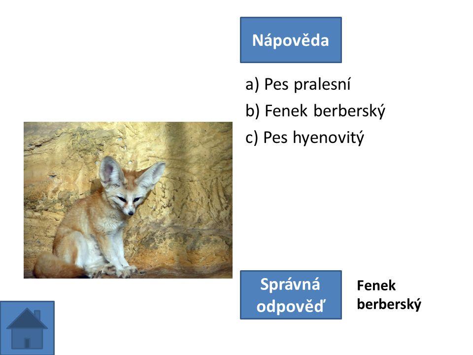 a) Pes pralesní b) Fenek berberský c) Pes hyenovitý Nápověda Správná odpověď Fenek berberský
