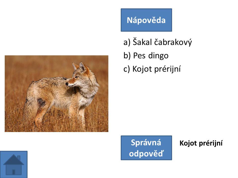 a) Šakal čabrakový b) Pes dingo c) Kojot prérijní Nápověda Správná odpověď Kojot prérijní