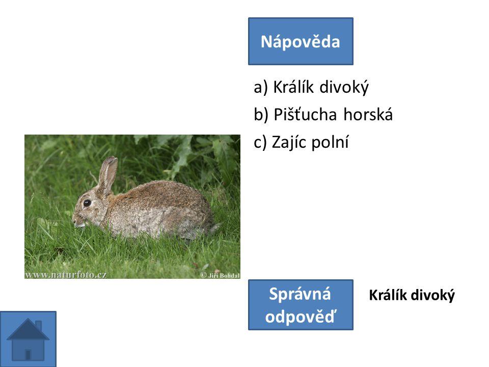 a) Zajíc polní b) Králík divoký c) Pišťucha horská Nápověda Správná odpověď Zajíc polní
