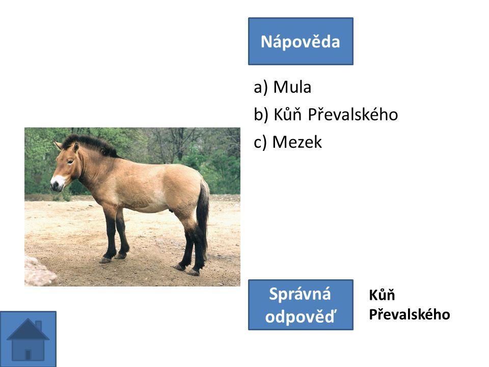 a) Mula b) Kůň Převalského c) Mezek Nápověda Správná odpověď Kůň Převalského