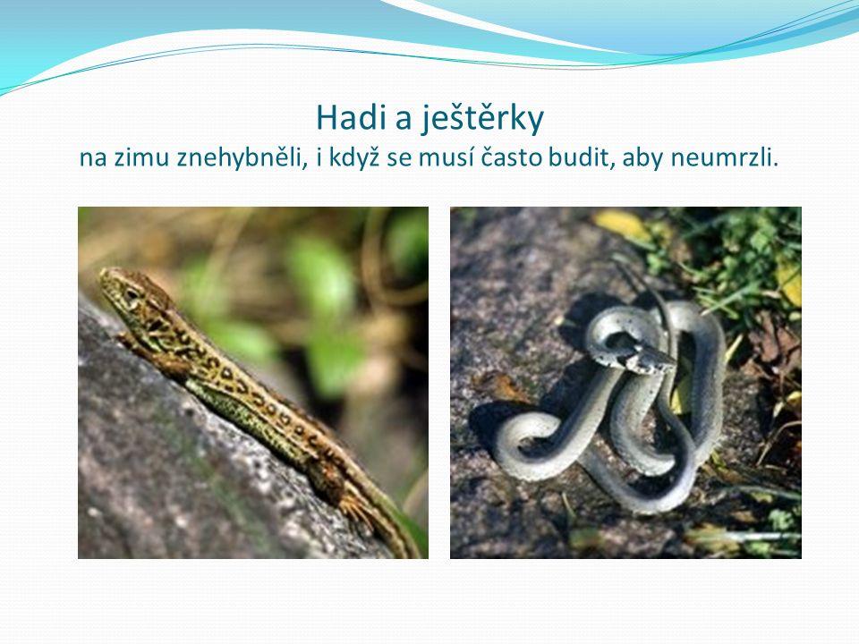 Hadi a ještěrky na zimu znehybněli, i když se musí často budit, aby neumrzli.