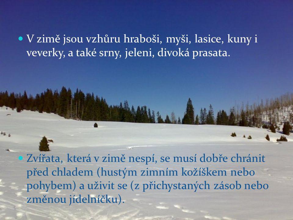 V zimě jsou vzhůru hraboši, myši, lasice, kuny i veverky, a také srny, jeleni, divoká prasata.