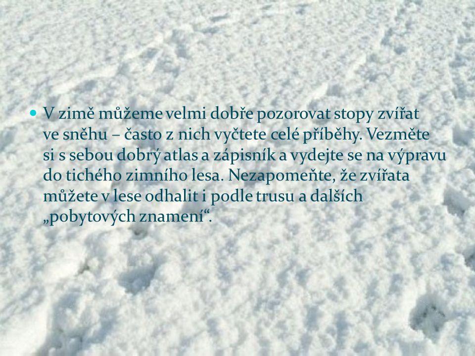 V zimě můžeme velmi dobře pozorovat stopy zvířat ve sněhu – často z nich vyčtete celé příběhy.