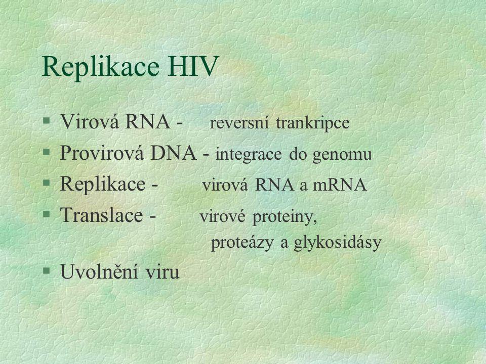 Replikace HIV §Virová RNA - reversní trankripce §Provirová DNA - integrace do genomu §Replikace - virová RNA a mRNA §Translace - virové proteiny, proteázy a glykosidásy §Uvolnění viru