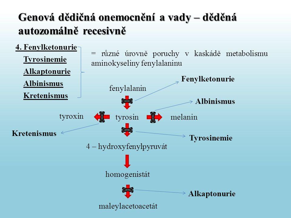 4. Fenylketonurie Tyrosinemie Alkaptonurie Albinismus Kretenismus = různé úrovně poruchy v kaskádě metabolismu aminokyseliny fenylalaninu Genová dědič
