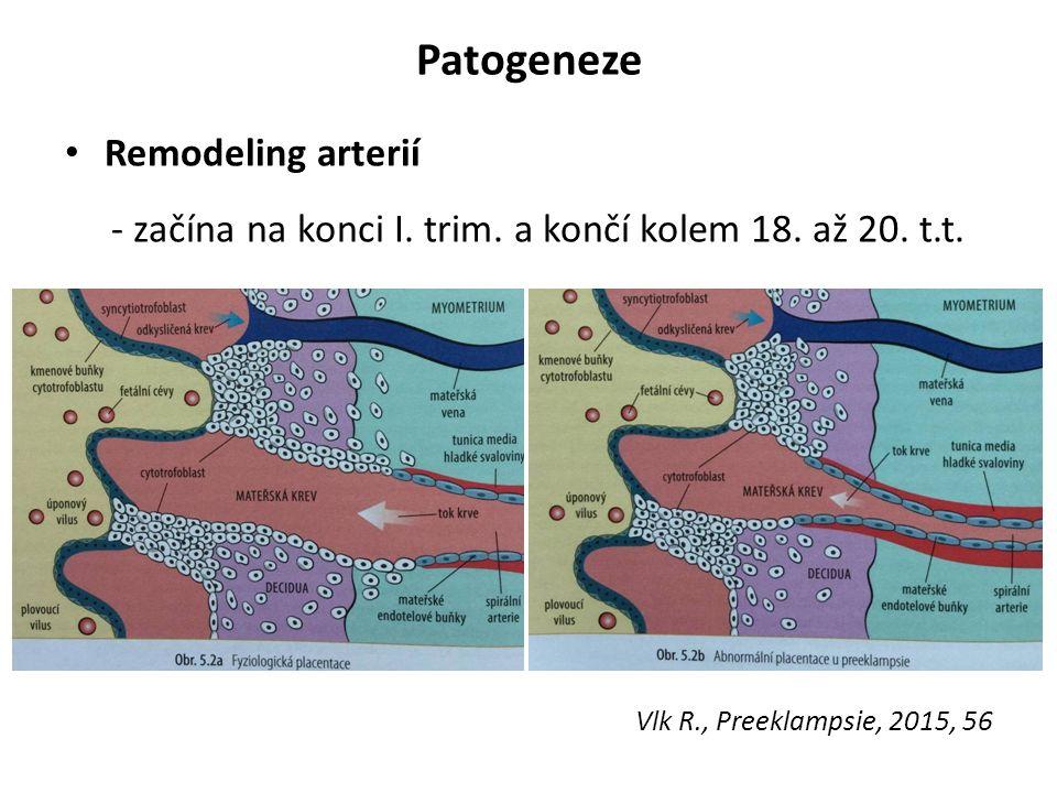Patogeneze Remodeling arterií - začína na konci I.