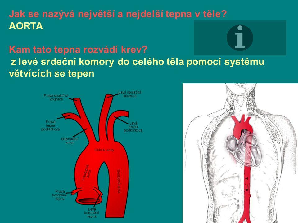 Jak se nazývá největší a nejdelší tepna v těle. AORTA Kam tato tepna rozvádí krev.