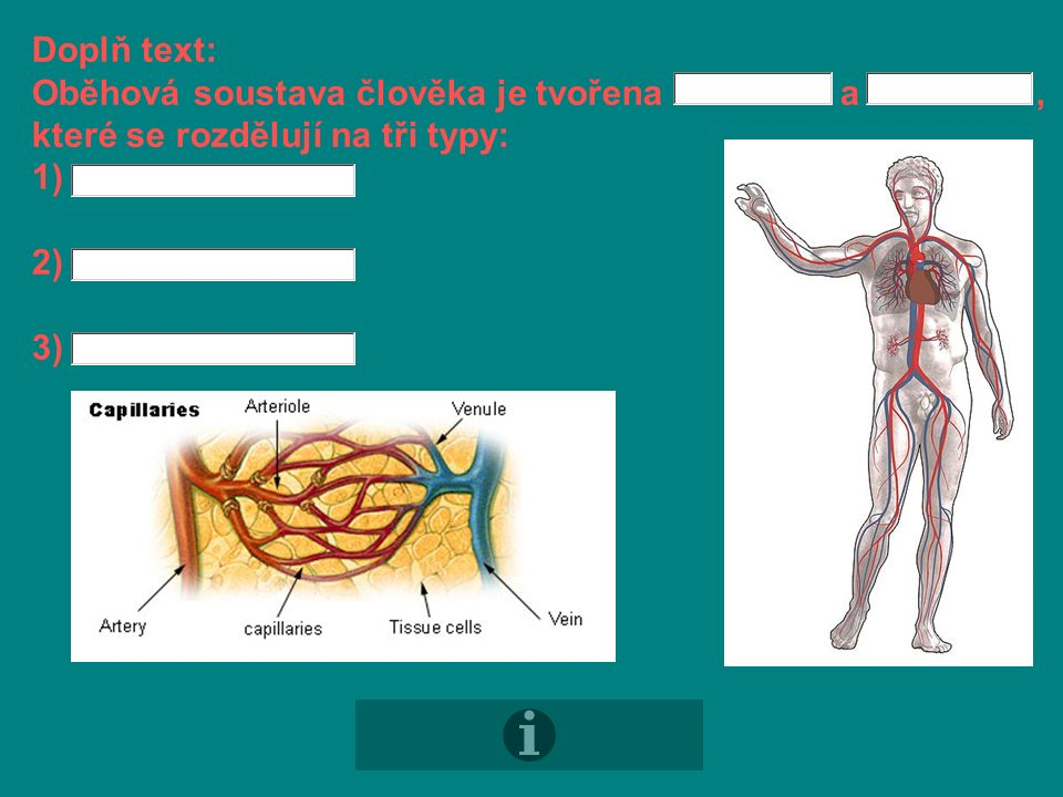 Doplň text: jsou cévy, které vedou krev a mají silnou stěnu.