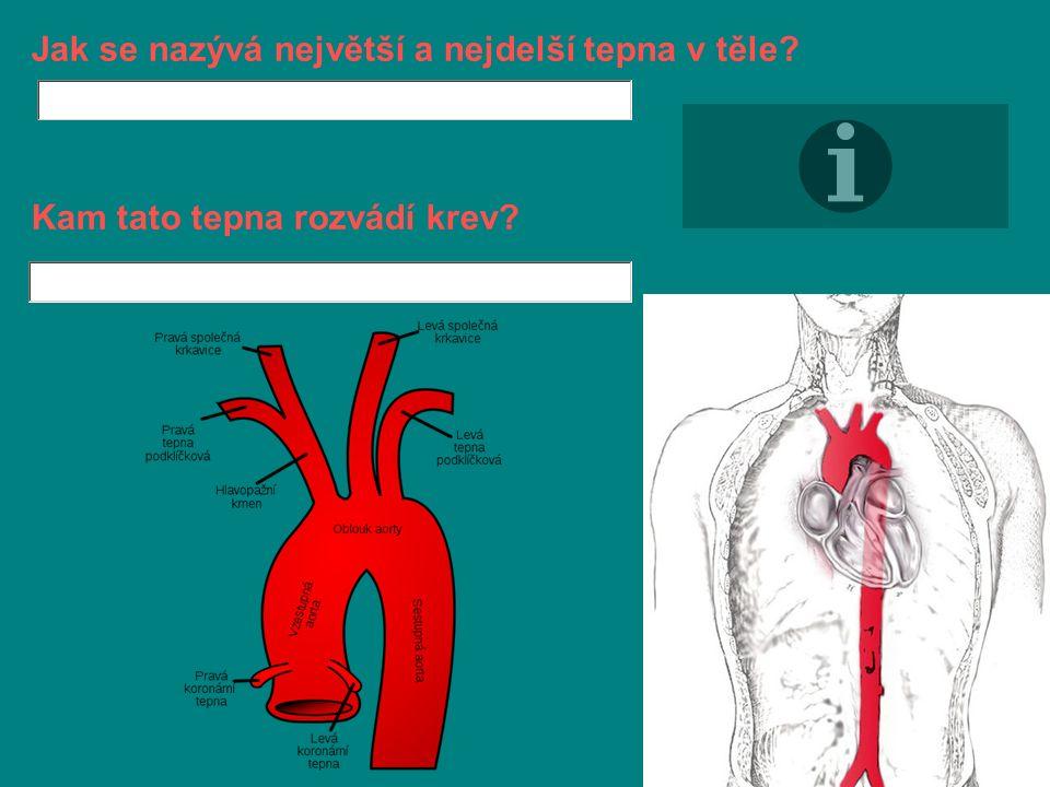 Jak se nazývá největší a nejdelší tepna v těle Kam tato tepna rozvádí krev