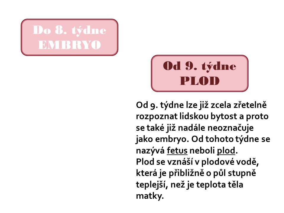 Do 8. týdne EMBRYO Od 9. týdne PLOD Od 9.